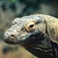 Komodo, Taman Nasional Komodo
